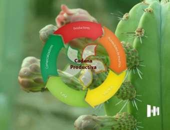 Sistema Producto Pitaya